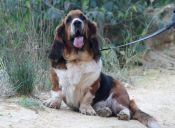 5 peligros que debes tener en cuenta al pasear a tu perro