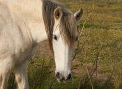 Problemas de conducta de los caballos