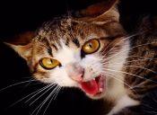 10 cosas que los gatos odian de los humanos