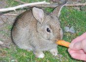¿Qué enfermedades pueden afectar a mi conejo?
