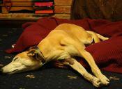 ¡Peligro! Los riesgos de la automedicación en las mascotas