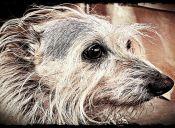 Geriatría veterinaria: los cuidados que requiere una mascota anciana