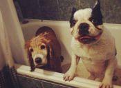 ¿A tu perro no le gusta bañarse?