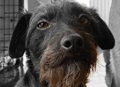 10 motivos por los que es bueno adoptar un perro viejo