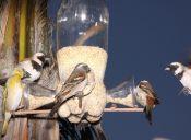 Cómo construir un comedero para pájaros silvestres