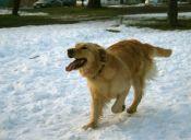 Los mejores lugares para pasear a tu perro en Punta Arenas