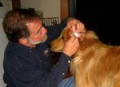 ¿Tu perro tiene otitis? Aquí van algunos consejos