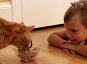 Consejos para alimentar a gatos según su edad