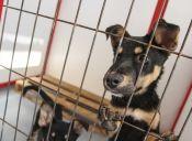 Mitos y realidades de adoptar una mascota de un refugio