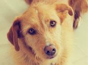 Manejando los celos caninos, aprenda el cómo poder controlarlos