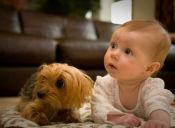 Perros, niñeras a prueba de balas (videos)