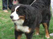 ¿De qué se trata la fungosis en los perros? Conoce cómo tratar esta enfermedad