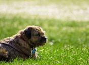 Los mejores lugares para pasear a tu perro en Concepción
