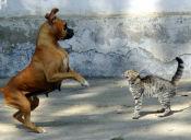Perros y Gatos son censados en Santo Domingo