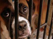 ¿Cómo prevenir y tratar las enfermedades respiratorias en los perros?