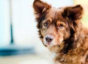 ¿Cómo evitar que mi perro se asuste con los fuegos artificiales?