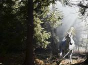 Animal mitológico: el Unicornio