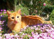 Historias de Mascotas: Mi gato ciego, el más feliz