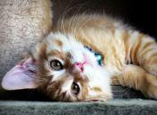 7 consejos para hacer feliz a tu gatito