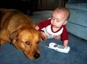 ¿Es bueno acercar un perro a una guagua?