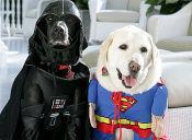 5 entretenidos disfraces de Halloween para tu perro