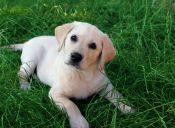 5 consejos para evitar que tu perro llore cuando sales