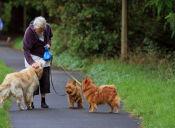 3 motivos para llegar a viejo con un perro