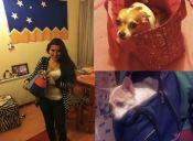 Lo confieso: paseo a mi perro en la cartera