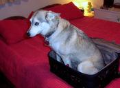 ¿Es bueno sedar a tu mascota en viajes largos?