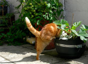 ¿Cómo evitar que mi gato defeque en mis plantas?