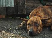 ¿Cómo saber si tu perro está deprimido?