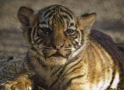 ¿Qué diferencia hay entre animales amenazados y animales en peligro de extinción?