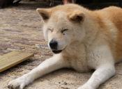 Los parásitos más peligrosos en los perros