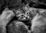 ¿Qué hago si me encuentro una camada de gatitos recien nacidos?