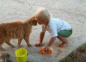 Los 4 mejores videos de gatos graciosos con niños