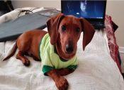 Historias de Rescate: Salvé a mi perro de un criadero clandestino