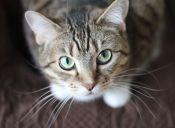 5 tips para socializar a tu gato tímido