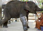 Animales con prótesis: una nueva oportunidad también para ellos
