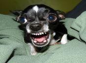 Como detener el bullying en perros