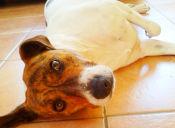 Historias de Mascotas: Holly, la cachorra rechazada