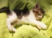 Historias de Mascotas: Mi gata es introvertida