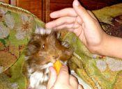 ¡Tengo la mejor mascota del mundo!: una Cobaya