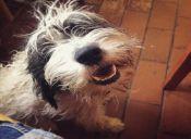 Historias de mascotas: Mi perro héroe salvó a un gatito