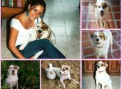 Historias de mascotas: La búsqueda implacable de la perrita Nagasaki