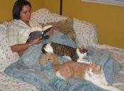 Mito y realidad sobre las solteras y los gatos