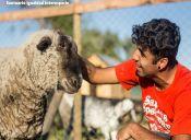 9 santuarios de animales de granja que no debes dejar de conocer