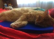 Historias de mascotas: cómo mi gato me ayudó a salir adelante