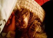 Historias de Mascotas: La gatita traída de un cementerio de París