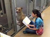 Niños leen a perros de un refugio para aliviar su estrés y dolor