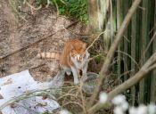 Historias de Rescate: una gatita herida bajo la lluvia